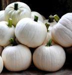 Cotton Candy Pumpkins