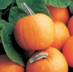 Orange Smoothie Pumpkins