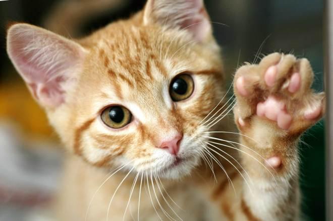 06-train-cat-shake-hands