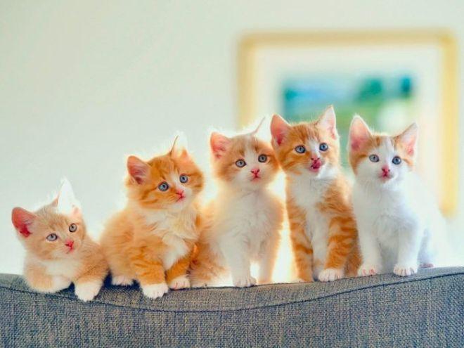 10ec8017c9599df720834cf579ba39cf--menu-design-funny-cats