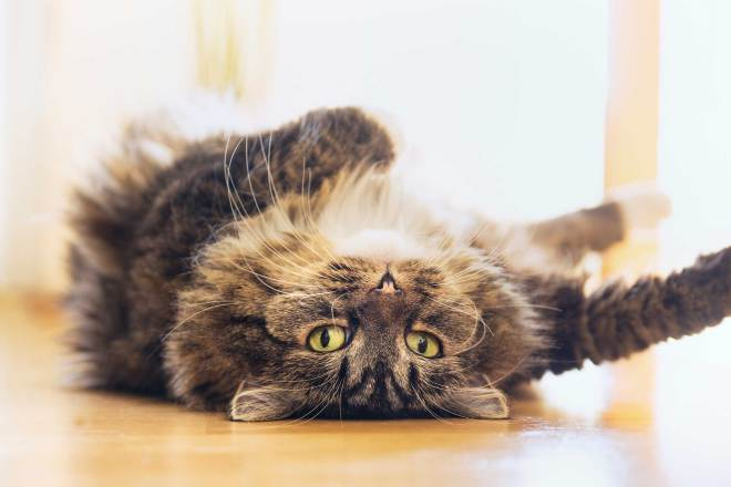 15-cat-wants-to-tell-you-attention